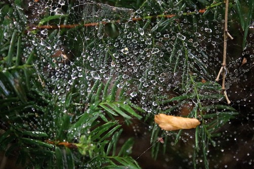 Newswise: Will Raindrops Stick to a Spider Web's Threads?