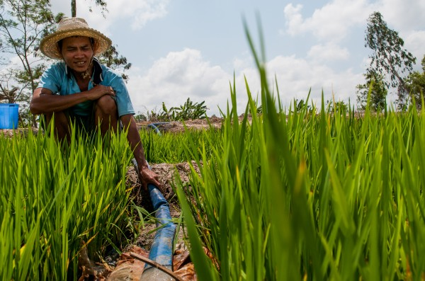 In Vietnam, alternate wetting and drying in irrigated rice is helping farmers use less water, and lower emissions, without compromising yields.