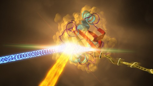 This illustration depicts an experiment at SLAC that revealed how a protein from photosynthetic bacteria changes shape in response to light in less than a trillionth of a second. Samples of the crystallized protein (right), called photoactive yellow protein, or PYP, were struck by an optical laser beam (blue light coming from left) that triggers shape changes in the protein. These were then probed with a powerful X-ray beam (fiery beam from bottom left) from SLAC's LCLS.