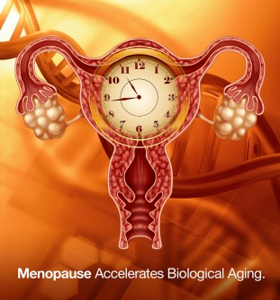 Newswise: Hot News Flash! Menopause, Sleepless Nights Make Women's Bodies Age Faster