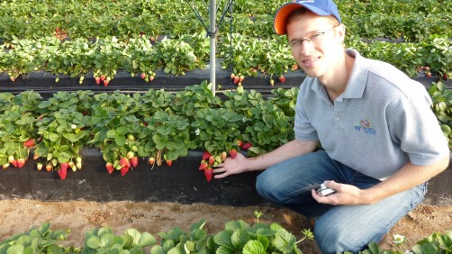 Newswise: UF/IFAS Research Findings Could Eventually Save $30 Million Annually for Strawberry Growers