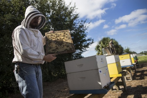 Newswise: UF/IFAS Researchers Share Safest Ways to Spray for Zika Mosquitoes, Protect Bees