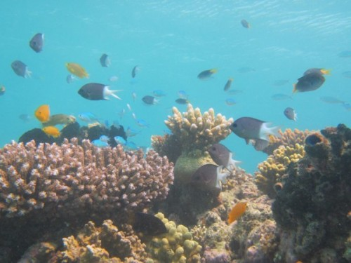 Newswise: Increased Carbon Dioxide Concentrations Alters Brain Chemistry in Ocean's Fish