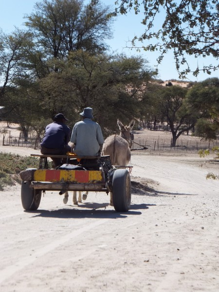 Men traveling by donkey cart through the Khomani San community in the southern Kalahari Desert, South Africa.