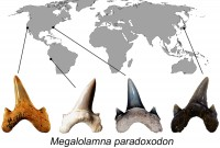 Newswise: Researchers Describe New Large Prehistoric Shark