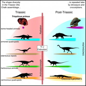 Newswise: New Species of Ancient Texas Reptile Offers Clues to Evolution of Dinosaurs