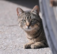 Newswise: Large Numbers of Outdoor Cats Pose Challenges for Communities