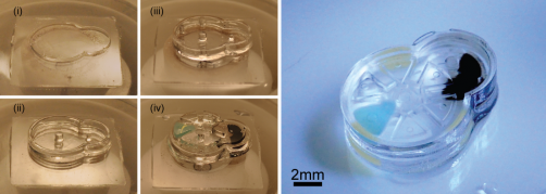Newswise: Implantable Microrobots: Innovative Manufacturing Platform Makes Intricate Biocompatible Micromachines