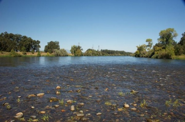 This is a picture of water flowing over a gravel riffle in the Sacramento River.