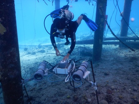 Newswise: Corals May Show Complex, Coordinated Behavior