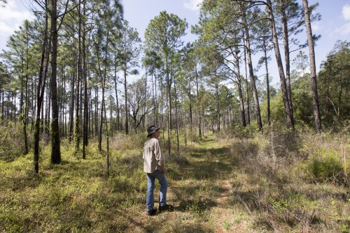 Newswise: Study: Voters Want to Preserve Forests, Water