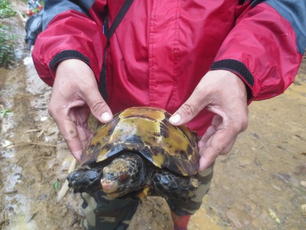 Newswise: Little Tortoise, Big Range