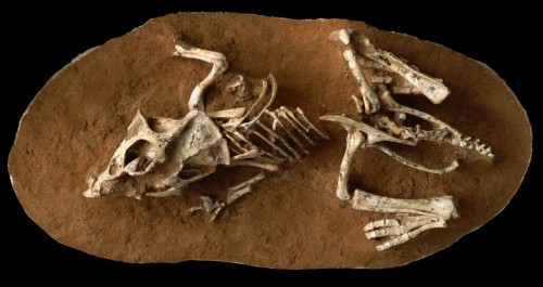 Newswise: Dinosaur Eggs Took a Long Time to Hatch; This May Have Contributed to Their Doom