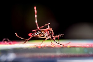 Newswise: Zika: Where Are We Now?