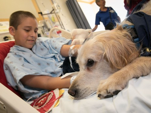 Newswise: Canine Cupids Bring Valentine Cheer to Hospitalized Patients
