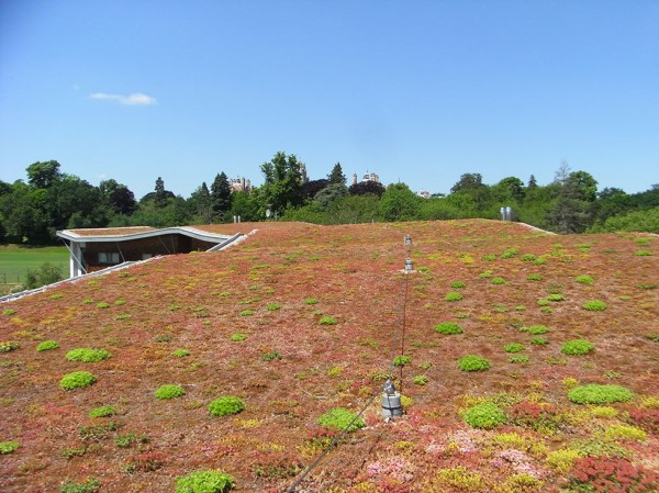 An extensive green roof in the grounds of Royal Holloway, University of London