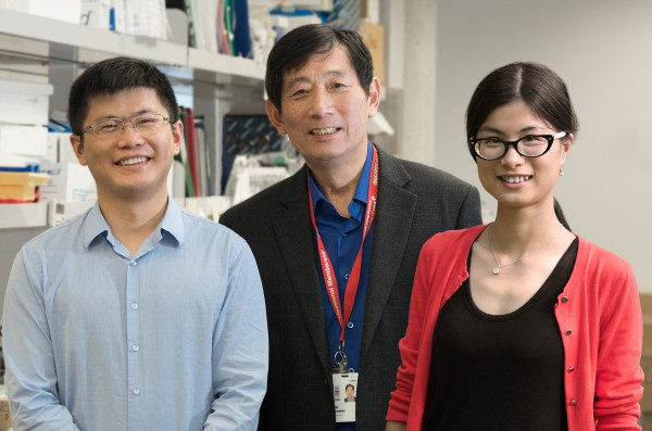 (L-to-R) The research team behind the study:  Linjiang Lao, Jiangping Wu and Yan Hu