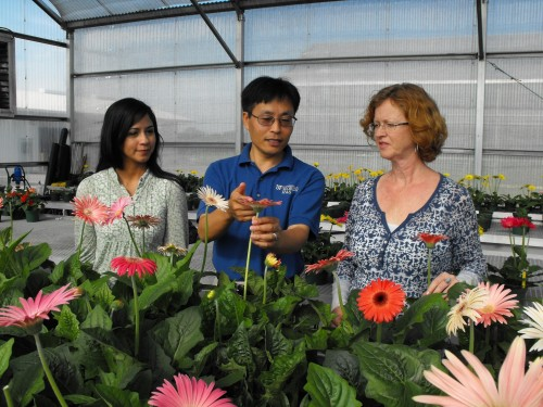 Newswise: Valentine's Day Means More Than Roses; UF/IFAS  Breeds, Suggests Other Plants to Give
