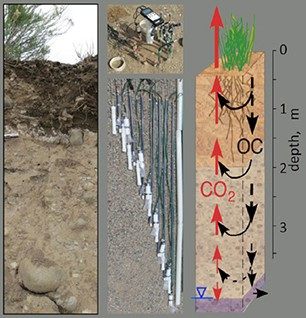 Left: Rifle, Colorado, floodplain vadose zone profile. Middle: Instrumentation for monitoring pore water and gas profiles down to the 3.5-m depth. Right: Respiration profiles sustained by organic carbon carried in infiltration water.