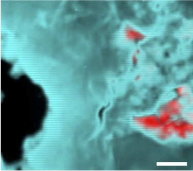 An X-ray fluorescence map of a shocked whitlockite sample. The red shows whitlockite and merrillite concentrations.
