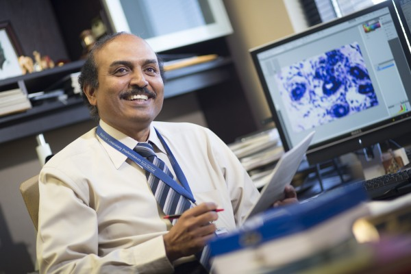 The TTUHSC El Paso research team will specifically study growth hormone and prolactin, two hormones known for stimulating breast cancer growth, but that dramatically dip in women after pregnancy. Lakshmanaswamy believes this hormonal reduction in postpartum women affects tissue within the breast, causing it to permanently alter and become resistant to mammary cancer.