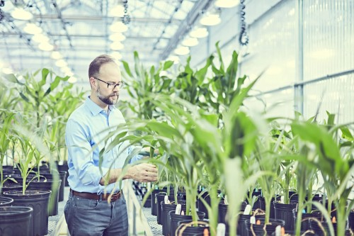 Newswise: Danforth Center Scientist Receives Awards From American Society of Plant Biologists