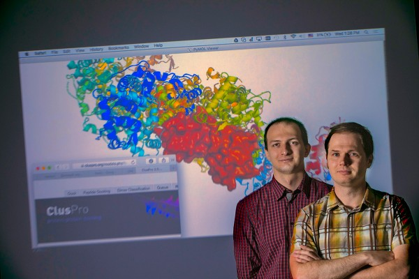 Dima Kozakov, right, and Dzmitry Padhorny, co-author and graduate student, continue to work on ClusPro, the server that enables researchers worldwide to calculate and display protein interactions, as shown in the background based on color and shape patterns.