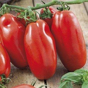 Newswise: Tomato Extract Fights Stomach Cancer, Ripe for Further Study