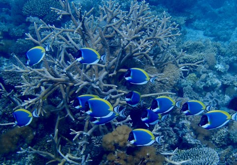 Newswise: Climate Change Refuge for Corals Discovered (and How We Can Protect It Right Now)