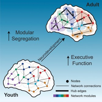Newswise: Penn Medicine Researchers Identify Brain Network Organization Changes That Influence Improvements in Executive Function Among Adolescents and Young Adults