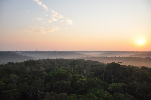 Newswise: Hotspots Show That Vegetation Alters Climate by Up to 30%