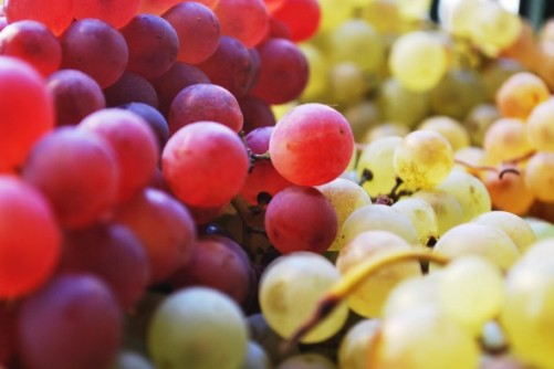 Newswise: Grape Seed Extract Could Extend Life of Resin Fillings