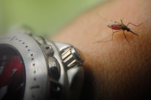 Newswise: Researchers Use Light to Manipulate Mosquitoes