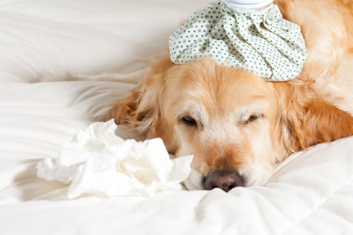 Newswise: Protect Your Pet From Canine Influenza