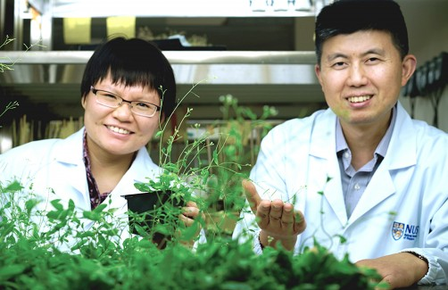 "Newswise: NUS Study: Plants Sacrifice ""Daughters"" to Survive Chilly Weather"