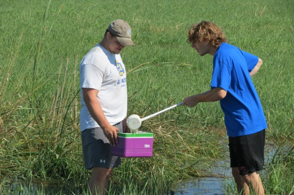 Gathering water samples from standing water to look for mosquito larvae is part of the work at South Dakota State University through the South Dakota Department of Health's West Nile virus surveillance program. Undergraduates Luke Zilverberg, left, and Alex Macki collect samples southwest of Brookings.
