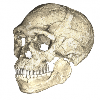 Newswise: Discovery in Morocco Points to Oldest Homo Sapiens Fossils