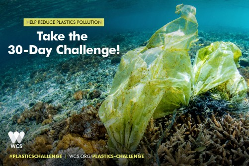 Newswise: WCS Launches 30-Day Plastics Challenge on World Oceans Day – Today, June 8