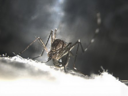 Newswise: UC San Diego Researchers Join $14.9 Million Fight Against Disease-Transmitting Mosquitoes