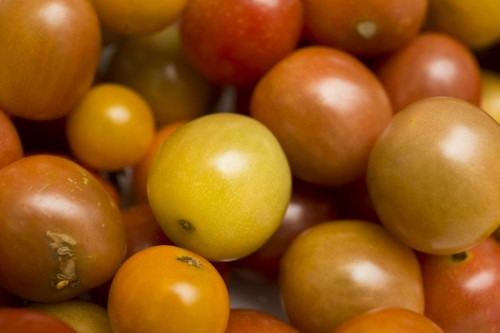 Newswise: UF Scientists Work on the 'Essence' of Better-Tasting Tomato Juice