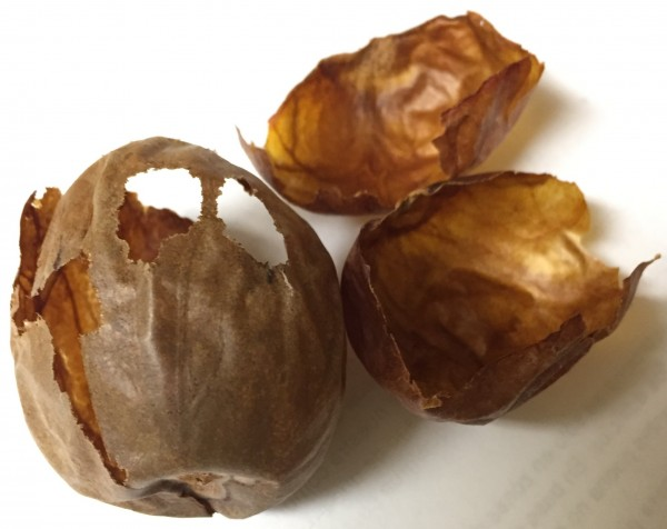 Avocado seed husks contain numerous chemical compounds that could be used in medicine and industry.