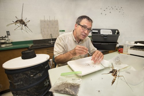 Newswise: BGSU Teams with Wood County to Monitor Mosquitoes