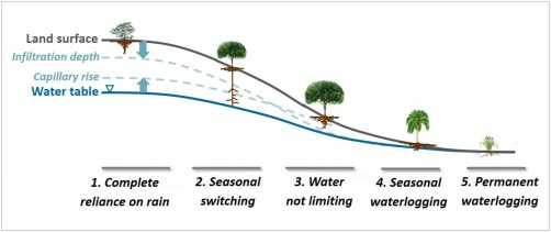 Newswise: Deep Roots in Plants Driven by Soil Hydrology