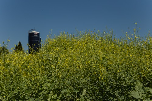 Newswise: Compound From Oilseeds May Be High-Value Product