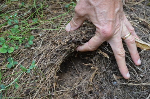 Newswise: Living Mulch Builds Profits, Soil