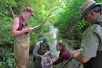 Newswise: Study Highlights Conservation Needs of Fish Species Recently Discovered in Southwest Virginia