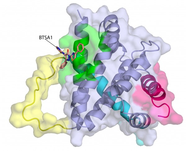 This image depicts the structure of the BAX protein (purple). The activator compound BTSA1 (orange) has bound to the active site of BAX (green), changing the shape of the BAX molecule at several points (shown in yellow, magenta and cyan). BAX, once in its final activated form, can home in on mitochondria and puncture their outer membranes, triggering apoptosis (cell death).