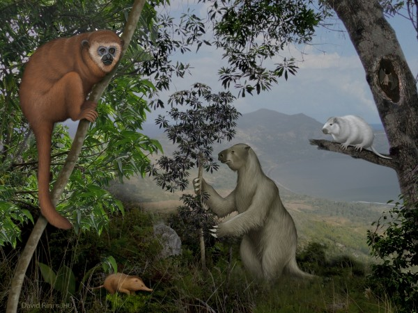 "The ""lost world"" of Caribbean animals included ground sloths, enigmatic monkeys, giant rodents, a vampire bat, and shew-like insectivores before the arrival of humans."