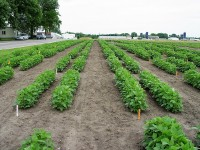 Newswise: High Yield, Protein with Soybean Gene