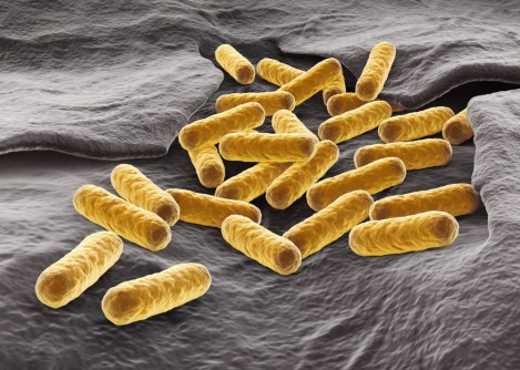 An engineering team at Washington University in St. Louis is using e. coli to manufacture biofuel. New research from the lab further refines the process.